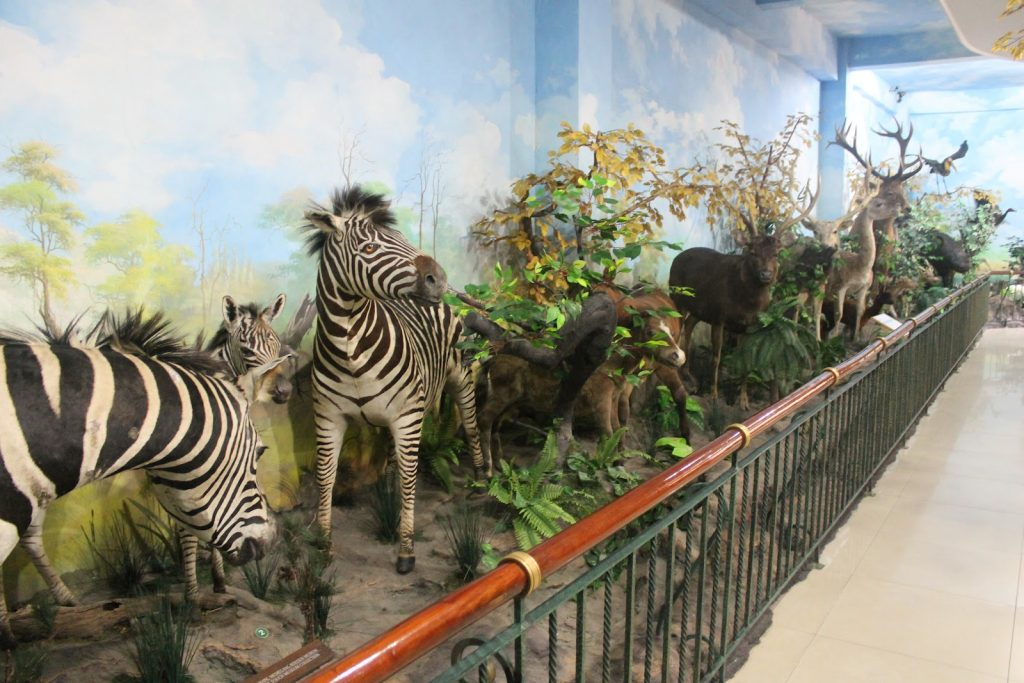 Rahmat International Wildlife Museum & Gallery attractions in Medan indonesia