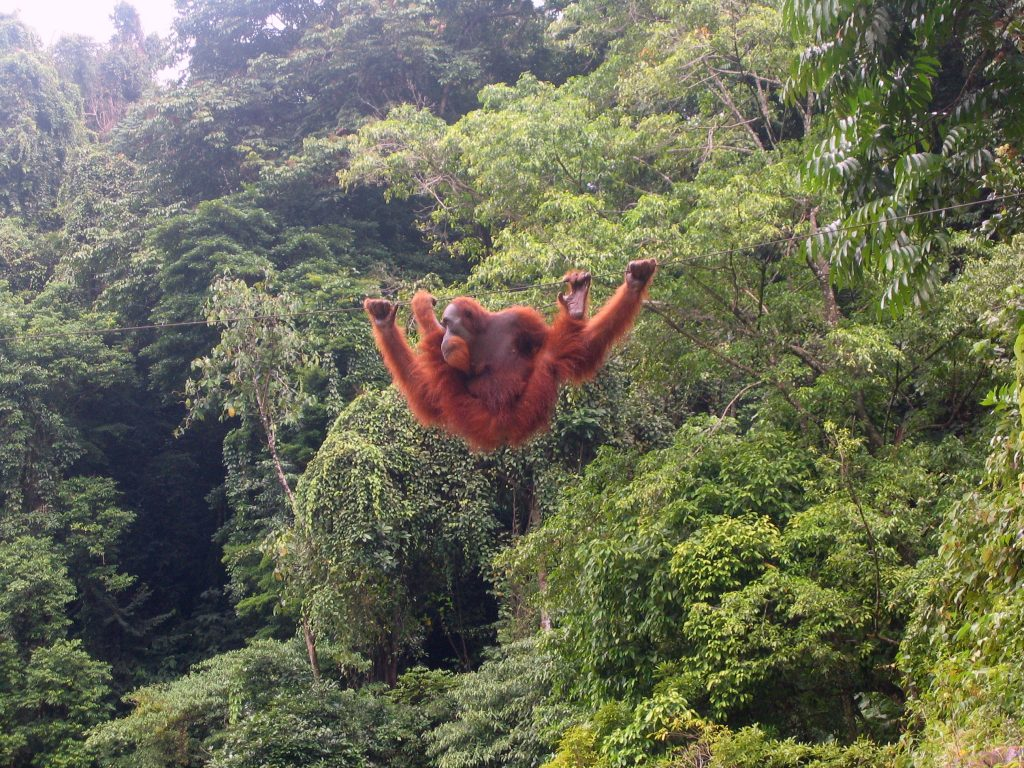 hidden north Sumatra places to visit Orang utan bukit lawang